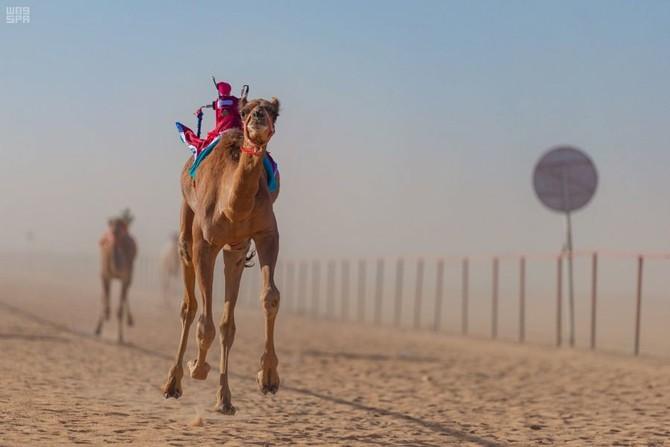 camel racing kuwait