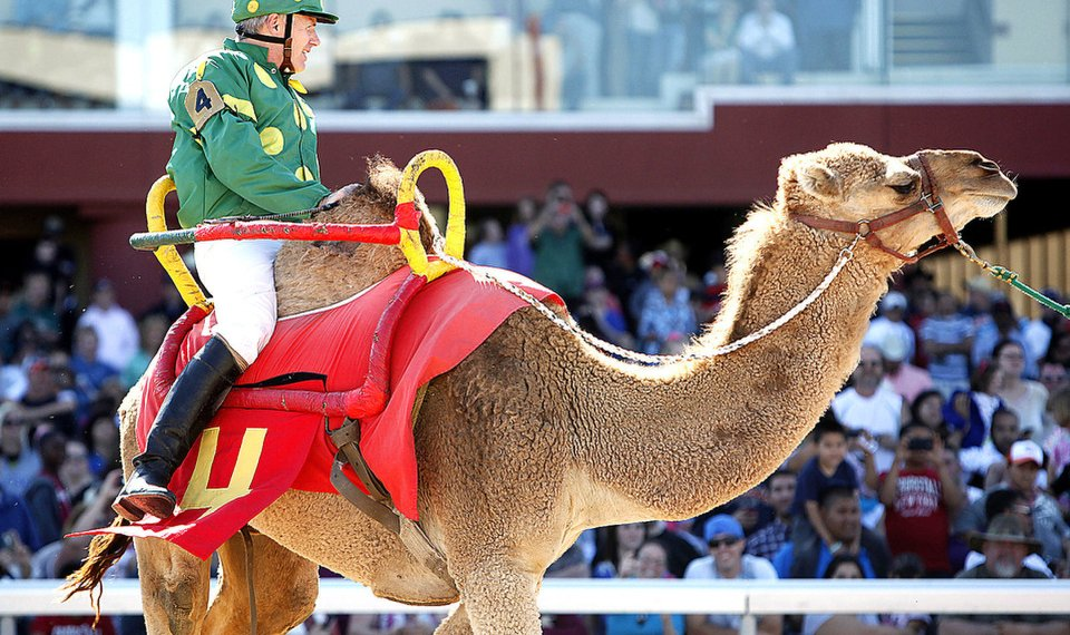 The Culture of Camel Racing
