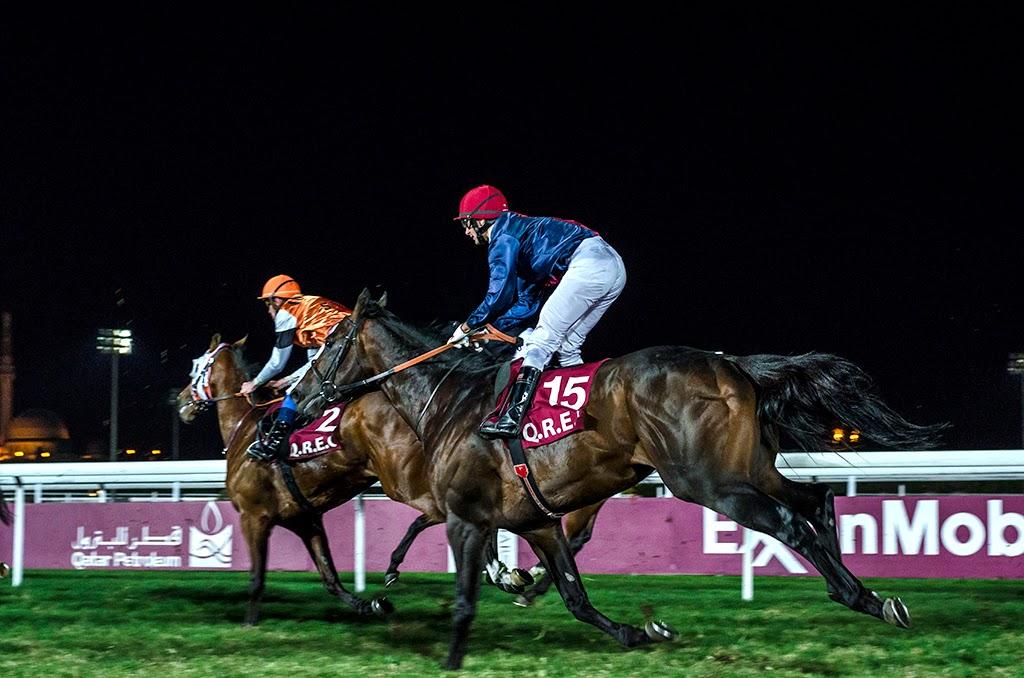 horse racing qatar, qatar horse racing, dexacortyl 100ml horse racing qatar