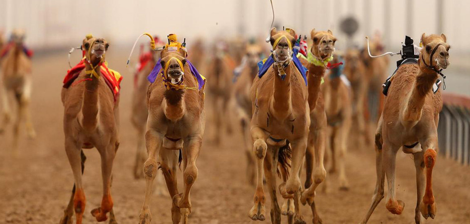 Camel racing in Dubai – The heritage sport of UAE