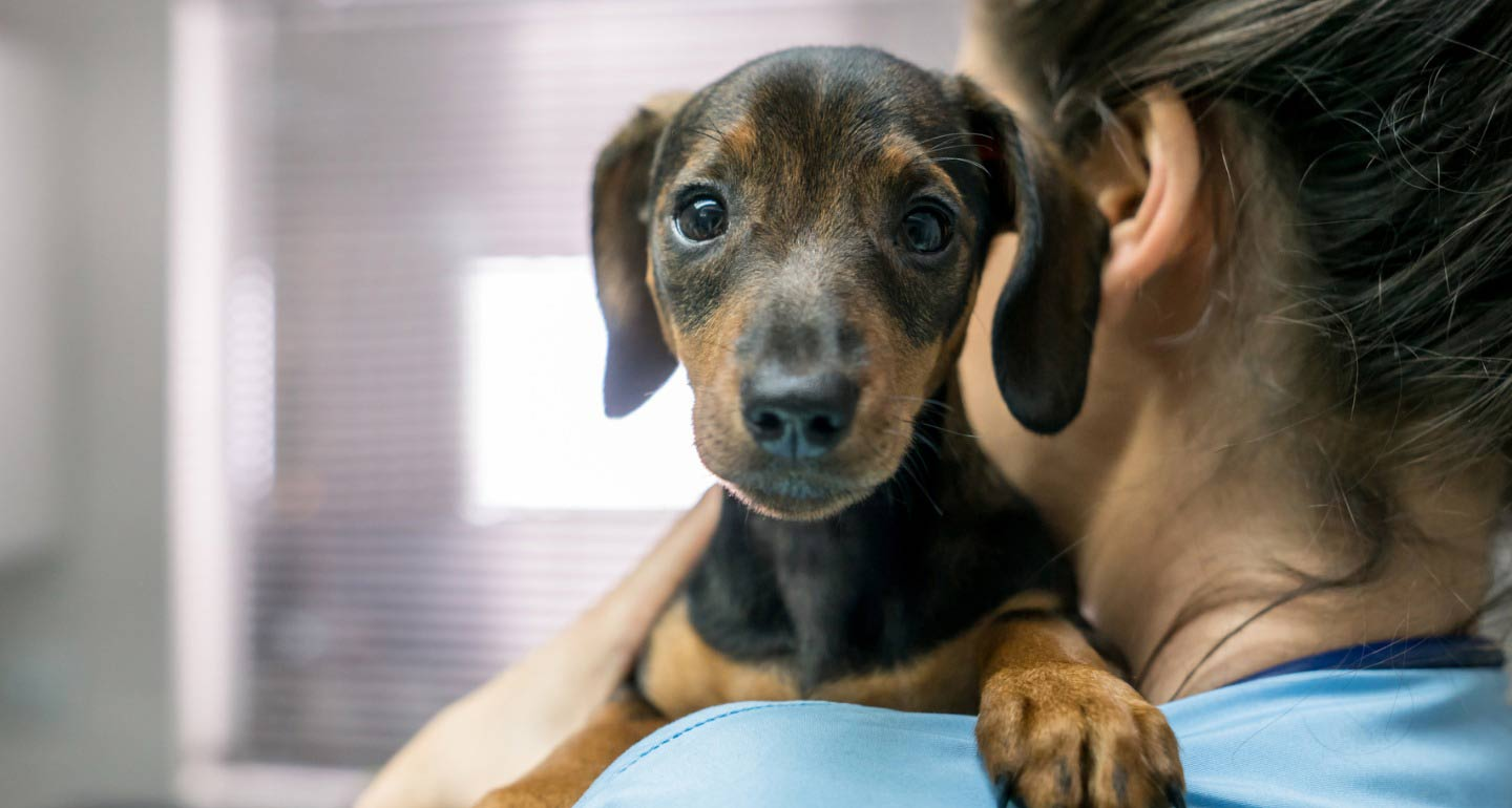 Deworming Puppies: What To Expect